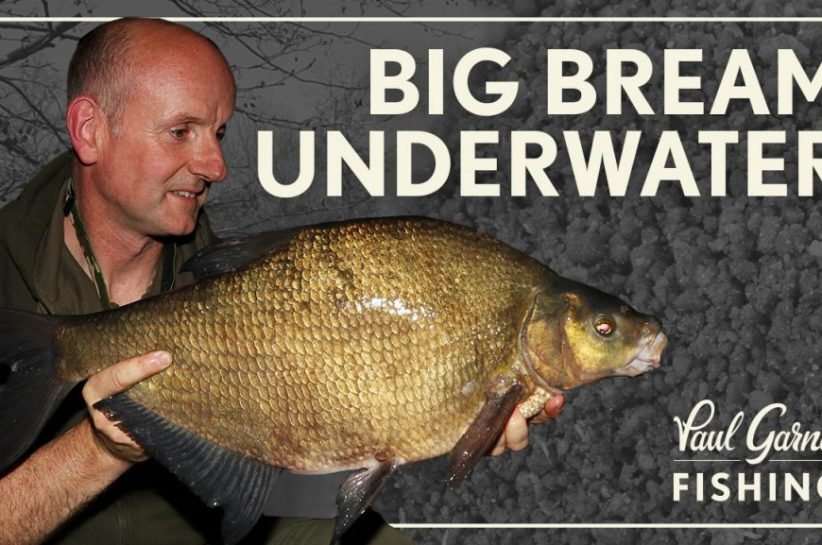 Bream Fishing : Big Bream Underwater